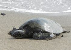 Related image Turtle, Animals, Image, Animales, Turtles, Animaux, Tortoise Turtle, Animal, Tortoise