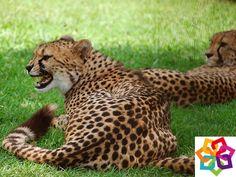 Michoacán te comenta: Si de vacaciones se trata, no olvides recorrer el maravillosos zoológico de Morelia, quien alberga a más de 6, 200 ejemplares, y cuenta con diferentes atracciones como : El Acuario, Paseo en Lanchas, La Cabaña Encantada entre otras.