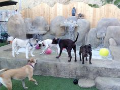 San Diego Dog Daycare and Boarding - Camp Run-A-Mutt Mission Hills - San Diego's Favorite Cage Free Doggie Daycare and Boarding