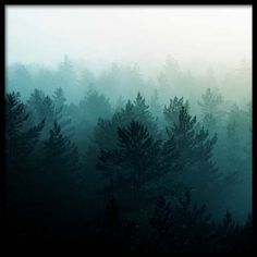View of misty forest Poster in the group Prints / Sizes / 50x50cm | 20x20 at Desenio AB (3567)