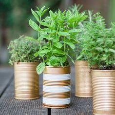 Fashion your own heavenly herb pots. Growing Veggies, Herb Pots, Fall Winter, Autumn, Heavenly, Planter Pots, Herbs, Magazine, Garden