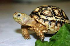 Baby tortoise centerpiece