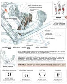 Наклонный жим ногами: техника, советы правильного выполнения упражнения. Нагрузка в процессе выполнения этого упражнения ложится на ягодичные мышцы и квадрицепсы