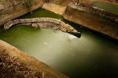 La melancolía de los animales en cautiverio| Ecoosfera http://www.ecoosfera.com/2013/10/la-melancolia-de-los-animales-en-cautiverio/