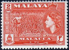 Malay State of Malacca 1957 SG 40 Pineapples Fine Mint SG 40 Scott 46 Other British Commonwealth Empire and Colonial stamps for sale Here