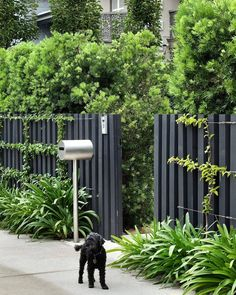 Having a fence is the basic privacy feature that every homeowner needs to get. Check out this list of black fence that will make your home looks prettier! Front Yard Fence, Pool Fence, Front Yard Landscaping, Modern Wood Fence, Modern Fence Design, Garden Fencing, Garden Trellis, Timber Fencing, Natural Fence