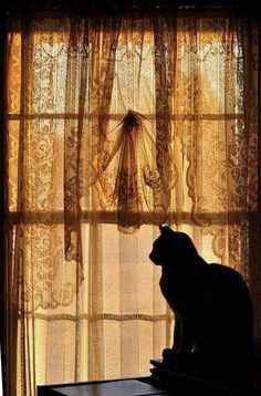 A fun image sharing community. Explore amazing art and photography and share your own visual inspiration! Cat Window, Black Bear, Color Shades, Victorian Homes, Amazing Art, Dog Cat, Horses, Black And White, Dogs