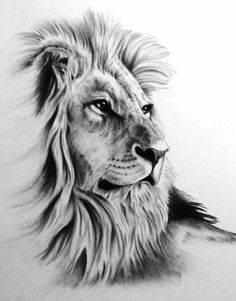 Lion tattoos hold different meanings. Lions are known to be proud and courageous creatures. So if you feel that you carry those same qualities in you, a lion tattoo would be an excellent match Art Roi Lion, Lion King Art, Lion Art, Kunst Tattoos, Tattoo Drawings, Tattoo Art, Animal Drawings, Pencil Drawings, Drawing Animals