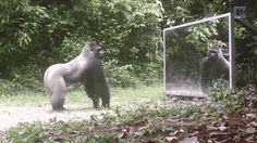Funny reactions of animals seeing their reflections for the first time | Daily Mail Online