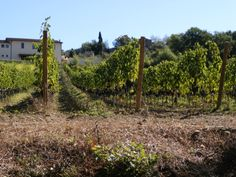 Winery and Vines