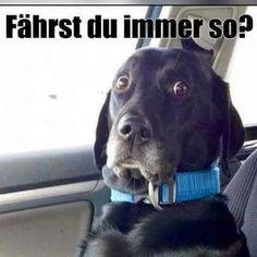 Die 18 besten Bilder von Lustige Bilder   Funny images, Fanny pics ...