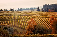 Willamette Valley wineries throw open their doors for special events each year duringThanksgiving Weekend to celebrate friends, family, and the completion of another harvest. Join us to kick off the holiday season as 160+ wineries offerspecial tastings, food pairings, live music, holiday discounts, and more. Each winery celebrates the festive weekend with itsown flair. Be […]