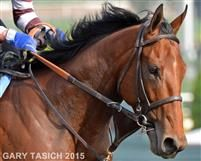 American Pharoah, runs his last race and wins Breeders' Cup      10-31-2015