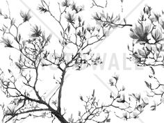 Magnolia Sketch - Tapetit / tapetti - Photowall