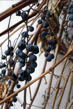 Winter Grapes on the Porch, photo by Kathy Sturr