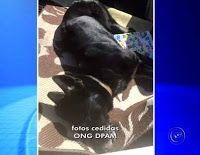"""""""O GRITO DO BICHO"""": Homem é multado em R$ 6 mil por envenenar cão com ..."""