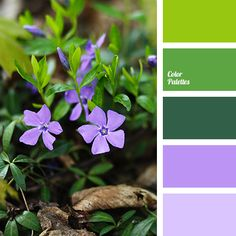malachite color