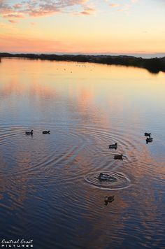 Pismo Beach duck pond at sunset by www.centralcoastpictures.com Pismo Beach, Chief Seattle, Avila Beach, San Luis Obispo County, Duck Pond, Central Coast, Beautiful Sunset, West Coast, Landscapes