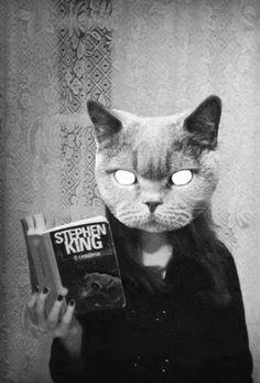 Cat reads Stephen King.