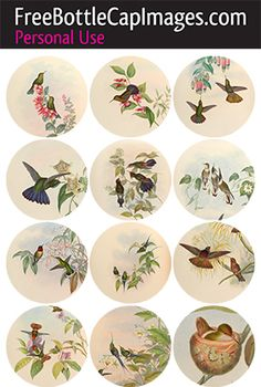 Bottle Cap Images of Humming-Birds painted by Gould Bottle Cap Art, Bottle Cap Crafts, Bottle Top, Bottle Cap Images, Soda Can Crafts, Image Sheet, Circle Template, Origami, Cork Crafts