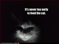 It's never too early to feed the cat. Must have been meant for my cat