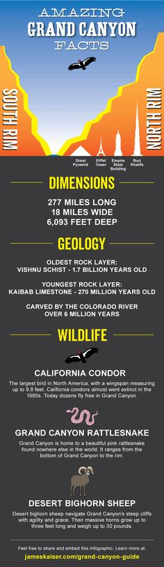 Grand Canyon Infographic - Amazing facts! Size, geology, wildlife and more