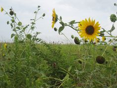 Flower Mound, Texas