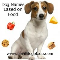 People chose dog names based on food because they want something unique and different. The extensive list includes great names based on all kinds of food. Tough Dog Names, Small Dog Names, Great Dog Names, Pet Names, Unusual Dog Names, Unusual Animals, Puppies And Kitties, Small Puppies, Dogs Names List