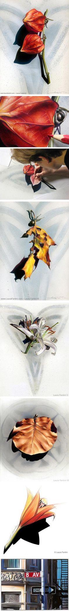 Beautiful drawings by Laura Fantini