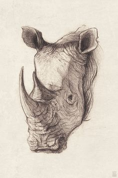 'Rhinoceros' by mikekoubou Animal Sketches, Art Drawings Sketches, Realistic Drawings, Animal Drawings, Pencil Drawings, Rhino Tattoo, Tattoo Art, Rhino Art, Kunst Tattoos