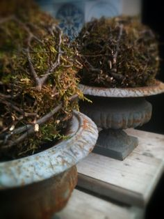 Branches … moss … iron wire … shaped into moss decorations in French iron vases … at home! Nature Decor, Nature Crafts, Natural Living, Seasonal Decor, Fall Decor, Garden Urns, Bordeaux, Winter Flowers, Container Plants