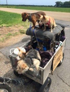 Homeless Man Saves 10 Stray Dogs, Receives Incredible Act Of Kindness