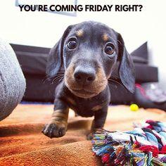 Sure...tomorrow 😍 . 📷 @maceo_the_sausage