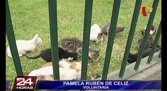 Lima Mayor Luis Castaneda Lossio and President of Peru Ollanta Humala Tasso  Ban the eradications of the Kittens from the University Park.