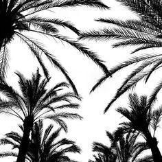 Immer wieder ein tolles Motiv und ich kann mich einfach nicht dran satt sehen: Palmen. Vielen Dank an @karriere_tutor für ein paar geniale Tage auf Mallorca! Arbeiten - aber auf eine sehr angenehme Art und Weise.  ________ #karrieretutor #kttribe #mallorca #satorre #balearen #baleares #palms #palma #spain