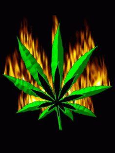 imagenes-de-marihuanas-para-descargar