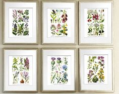 Unique botanical prints related items | Etsy