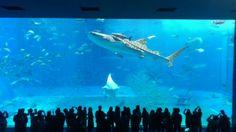 沖縄美ら海水族館 (Okinawa Churaumi Aquarium) The most amazing aquarium I've ever been to.  EVER.