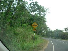 2014.06.14 - Strada per Anuradhapura 3 - Attenti ai varani!!!