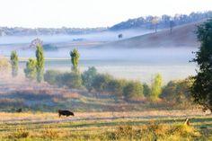 Savanne in het zuidoosten van Australië