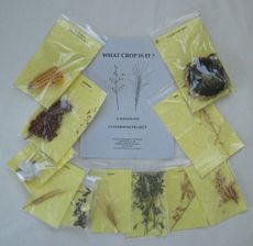 KIT: 10 samples of crop plants, 10 samples of products from crop plants, 1 project book. Samples of: cotton, field corn, soybeans, oats, wheat, barley, rice, sorghum, alfalfa hay, and oilseed sunflower. Barley Rice, Alfalfa Hay, Different Plants, Plant Growth, Children's Literature, Seed Oil, Fiber, Science, Kit