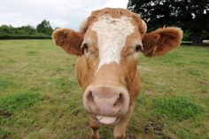 Closure of Cumbrian dairy farms costs local economy millions