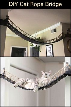 Cat Tree House, Cat House Diy, Cat Climbing Wall, Chesire Cat, Cat Run, Diy Sac, Cat Hacks, Outdoor Cats, Indoor Outdoor