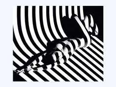 Zebra 17, 1988, photographie estimée entre 12.000 et 15.000 euros. (Maison de ventes Cornette de Saint Cyr). Cet artiste remarquable, reconnu comme l'un des plus grands photographes contemporains, récipiendaire de prestigieux prix de photographie et de direction artistique, nous présente une série mythique, ZEBRAS (ou Optic Stripes). Des nus vêtus d'ombres. Des corps dévoilés par la lumière. Un jeu magistral d'éclairages qui dessinent des formes sculpturales.