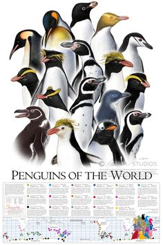 26 Penguin Facts That Will Make You Waddle With Joy! [2021] - Bird Watching HQ