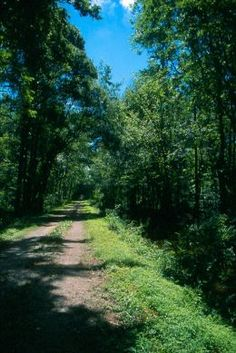 Washington Ditch. Great Dismal Swamp National Wildlife Refuge.