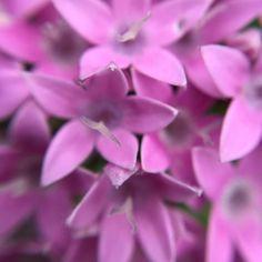 Nice weather for some macro photography. #flower #flowers #garden #mygarden #inbloom #bloom #pretty #gorgeous #flowerstagram #nature #rainbowsendgarden #florida #southflorida #floridalife #gardening #gardenlife #weekend #macro #macrophotography