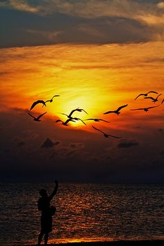 15 Sun-Kissed Silhouettes of Birds