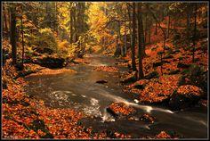 V barvách podzimu