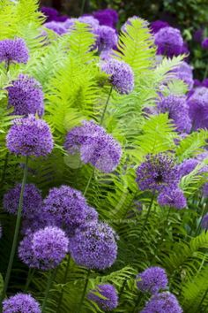My Favorite Plant Combinations 67